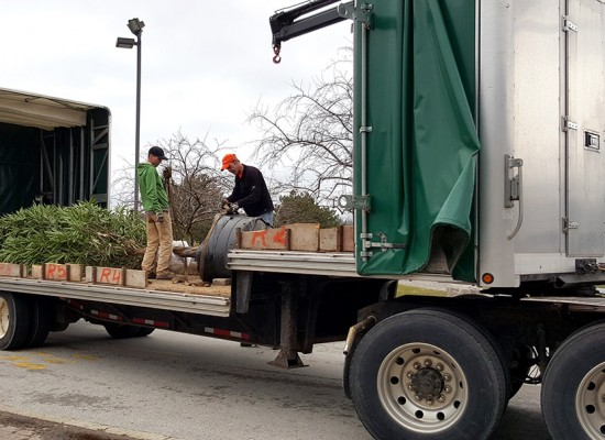 Fig tree arrives at Hamilton District Christian High